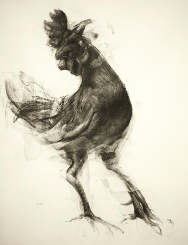 Rooster Study 10-4-17 by Artist Daniel Ochoa