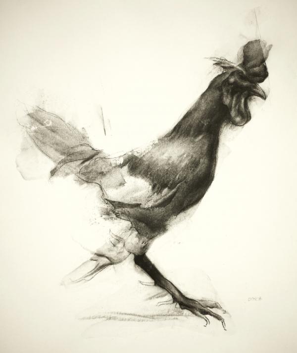 Rooster Study 11-6-17 by Artist Daniel Ochoa