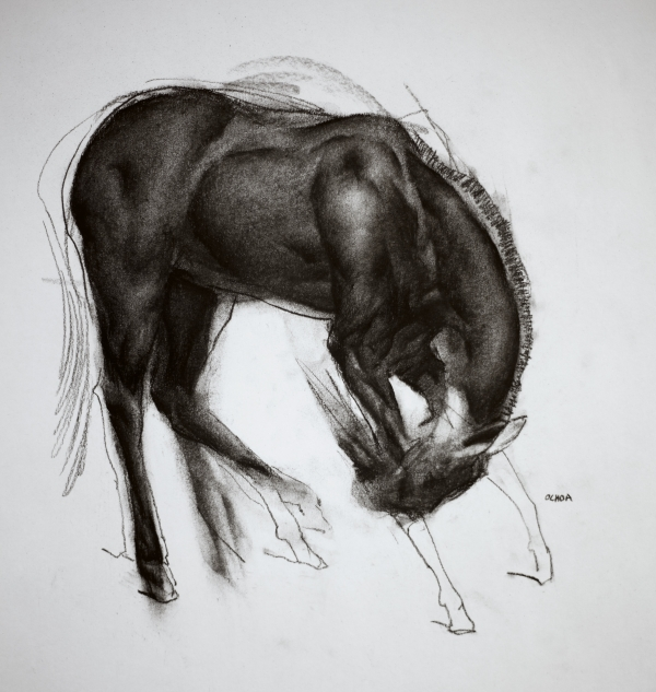 Horse Study 12-04-17 by Artist Daniel Ochoa