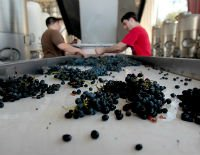 Schools With Degrees For Brewing & Winemaking