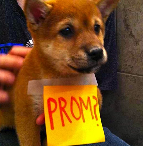 Proposal Ideas Using Pets: Best Promposals: The Most Creative Ways To Ask Someone To