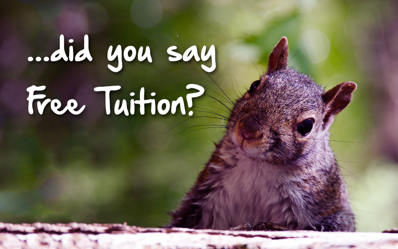 Go To College For Free: Colleges That Offer Free Tuition