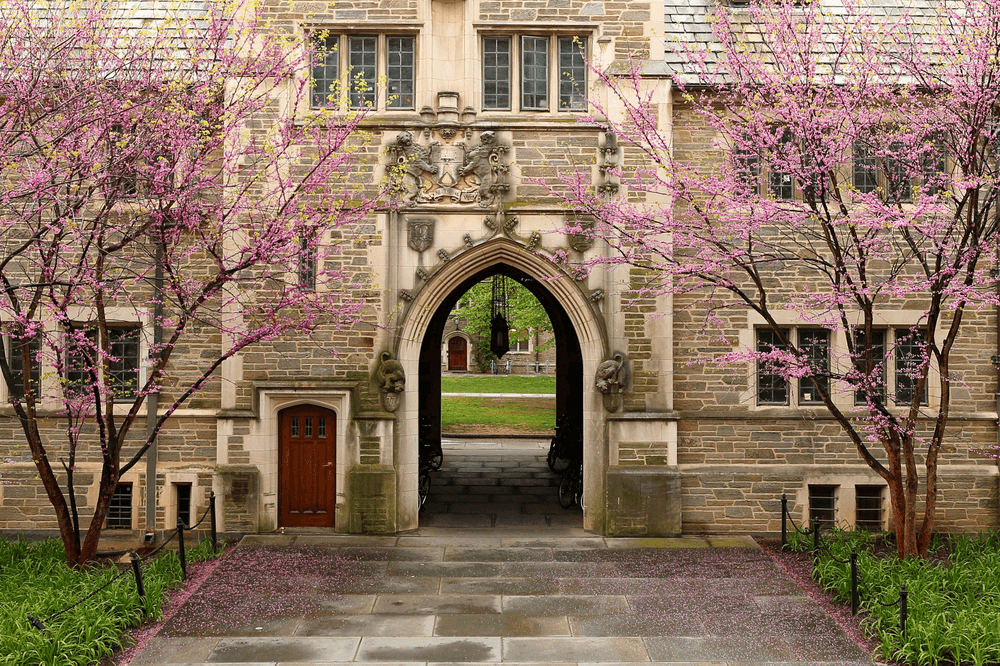 Princeton College Endowment