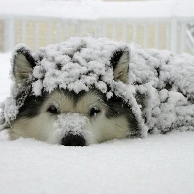 Cutearoo Puppy