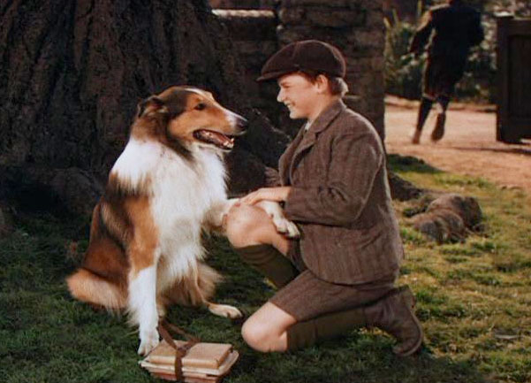Pal (as Lassie) with Roddy McDowall in Lassie Come Home
