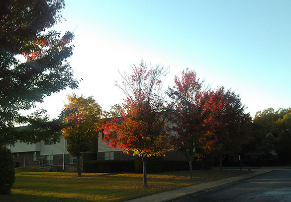 Fall foliage at our apartments in Spartanburg