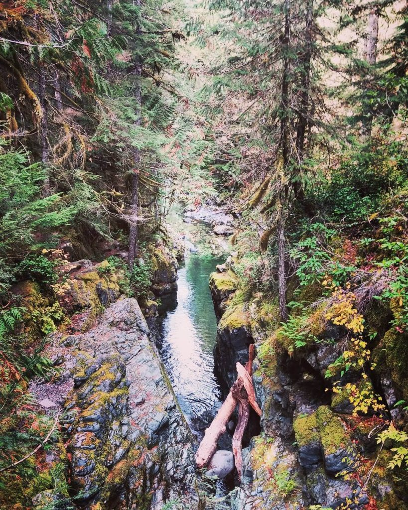 deep in the willamette national forest