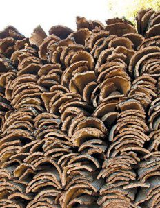 stacks-of-cork-bark-cork-harvest