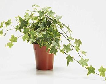healing-indoor-plants