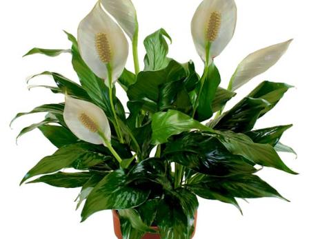 easy-indoor-plants