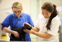 Veterinary Schools In Myrtle Beach Sc Become A Veterinary