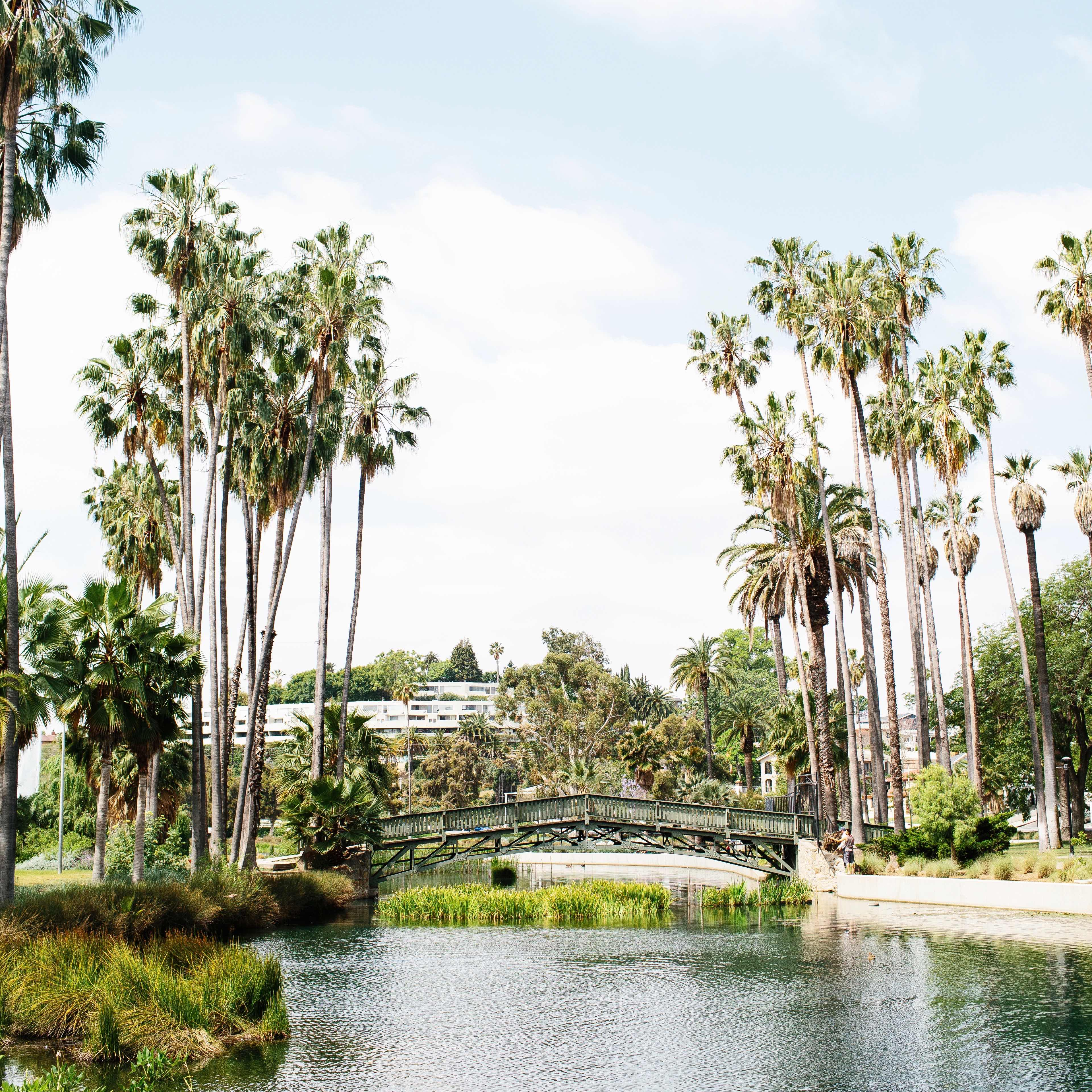 Palm trees on either side of a small bridge at Echo Lake Park in Los Angeles