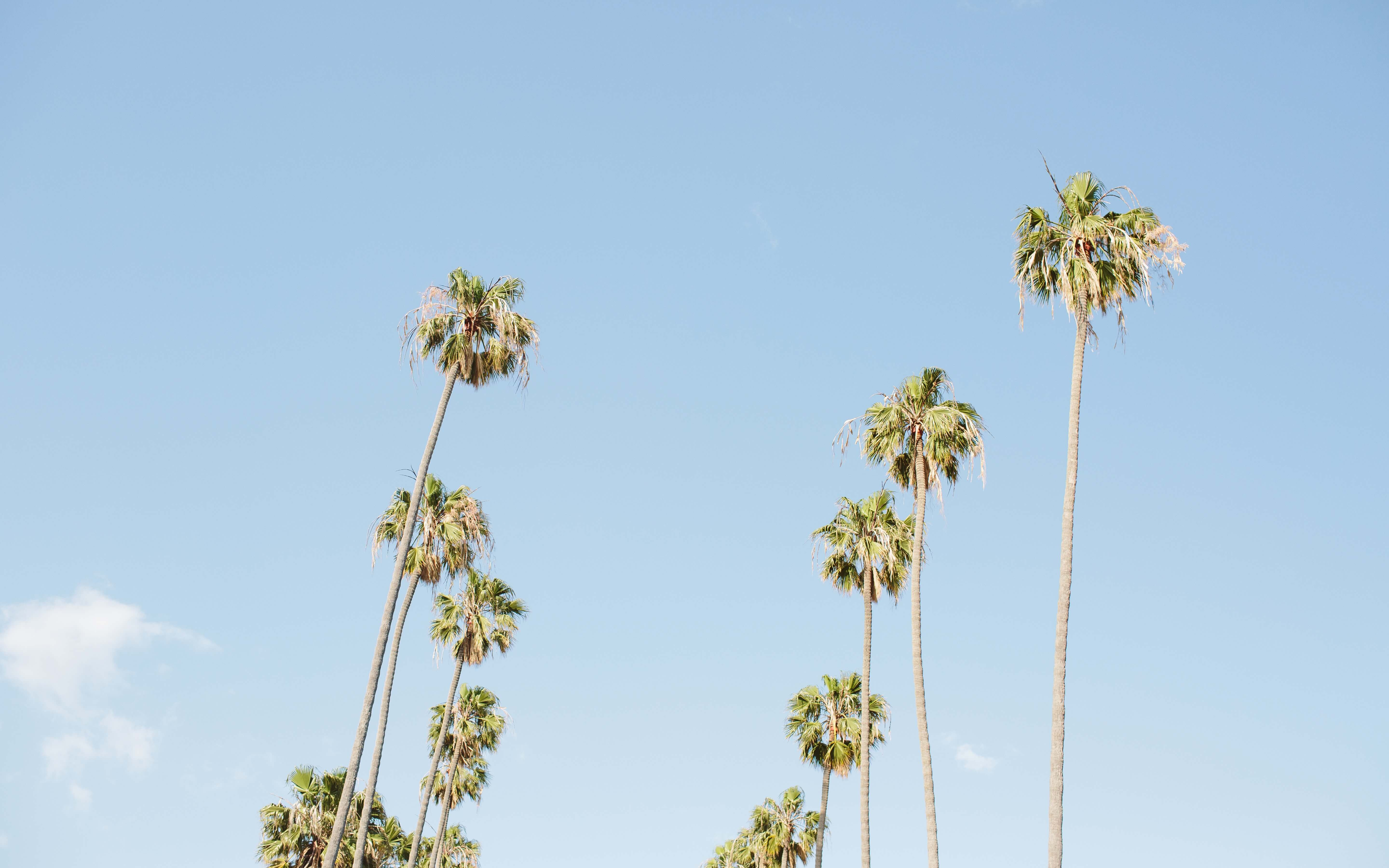 Photo of palm trees lined up in Los Angeles