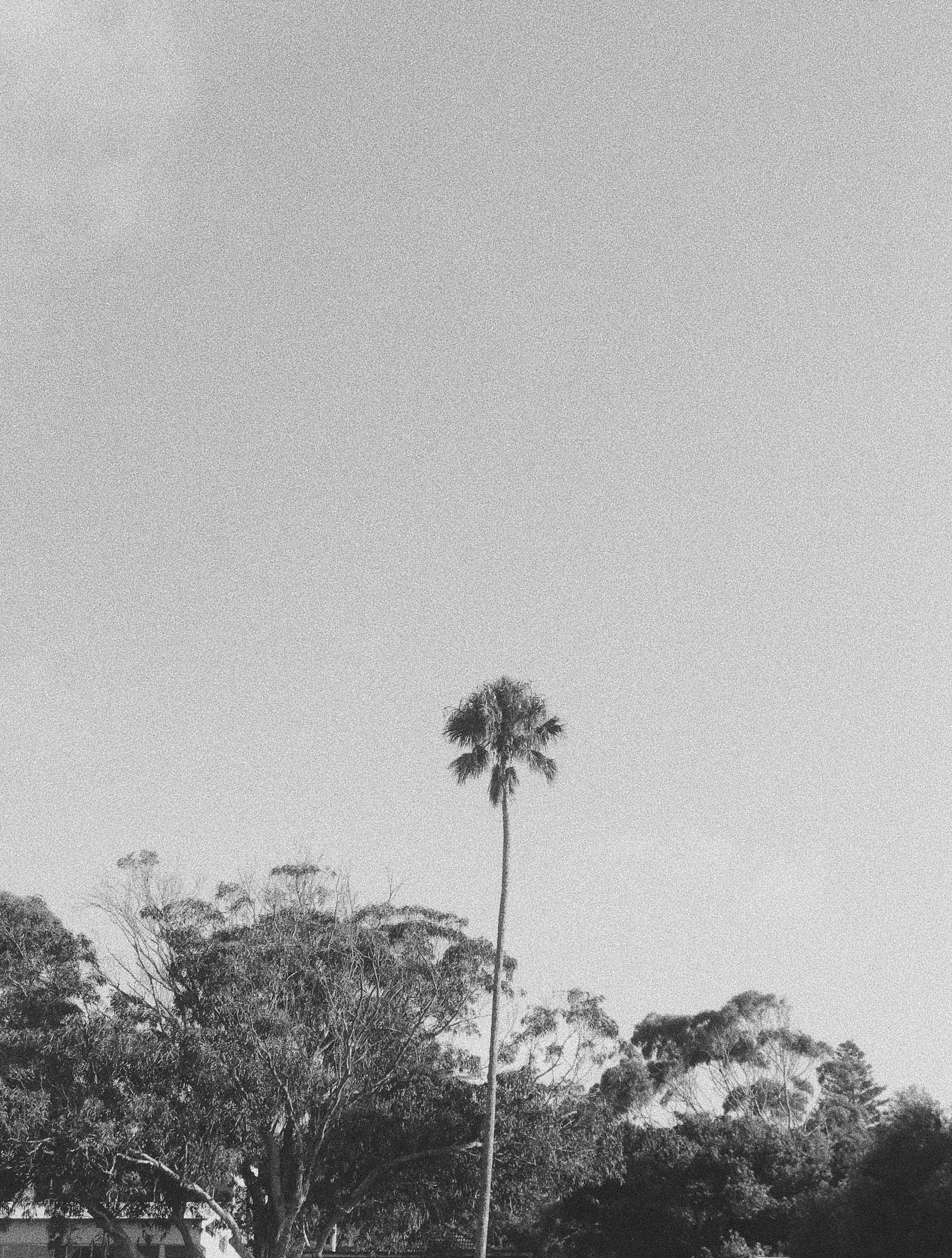 Lucy Laucht black and white photo of palm tree