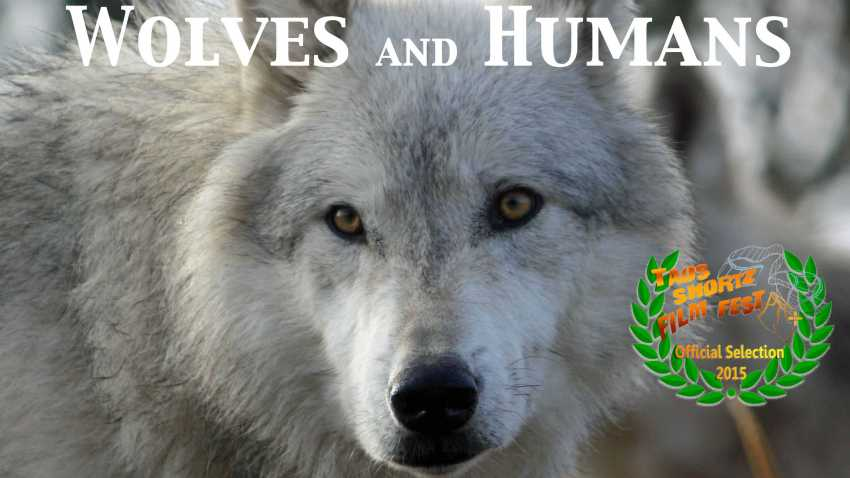 Wolves and Humans-A new story of coexistence