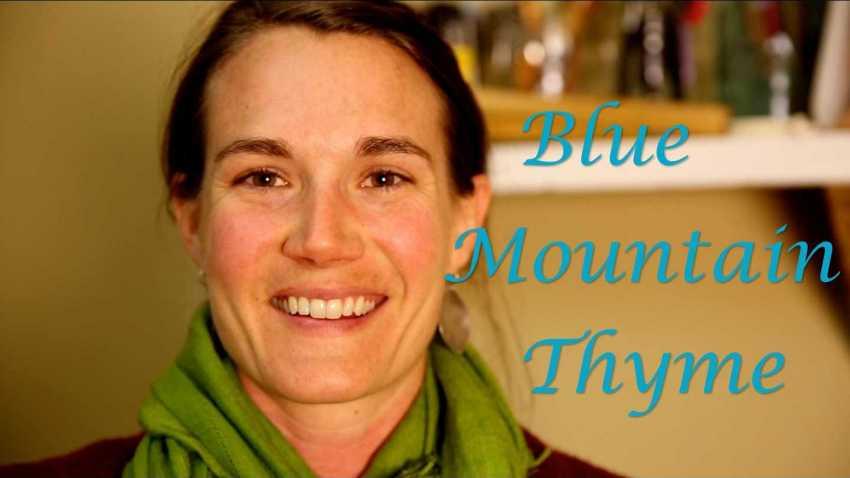 Blue Mountain Thyme