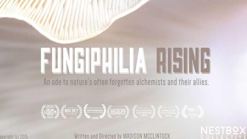 Fungiphilia Rising