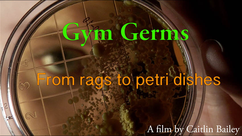 Gym Germs: From Rags to Petri Dishes