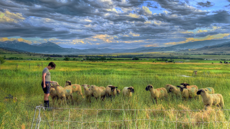 Regenerative Agriculture and the Next Generation of Ranching