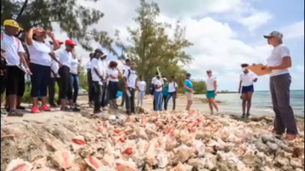 Conch Conservation in The Bahamas
