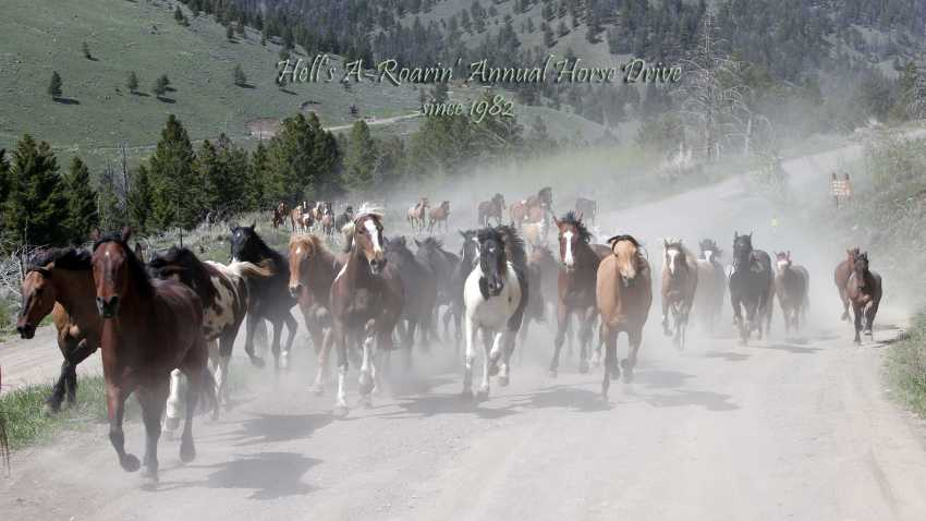 Hell's A-Roarin' Outfitters Annual Horse Drive - Gardiner, Montana