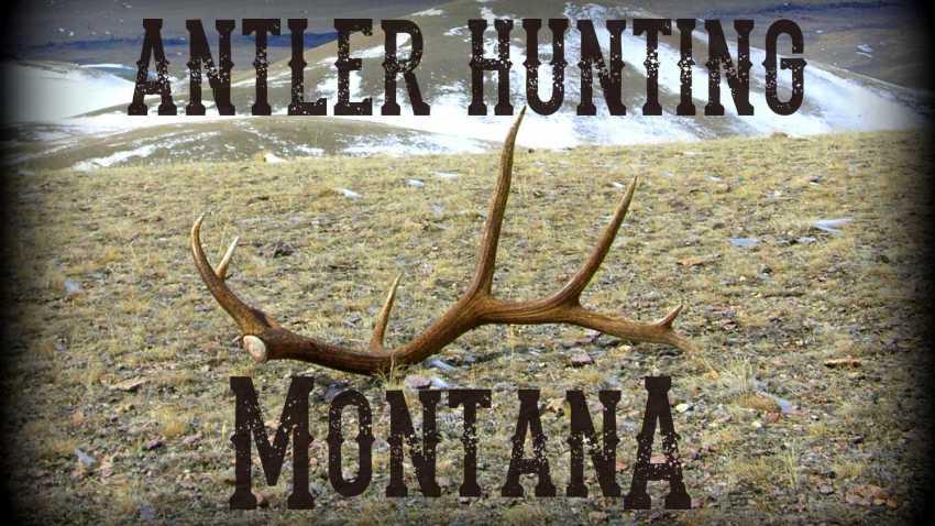 Antler Hunting Montana