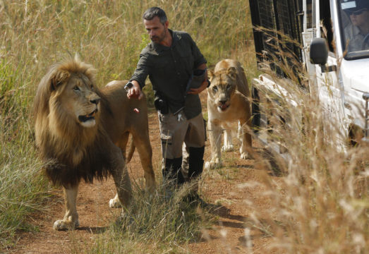 Woman killed by lion at S.Africa game lodge