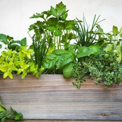 live seasonal herb garden