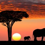 Safari Travel Insurance - Review