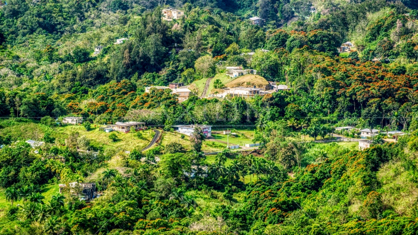 Rural homes in the tree covered hills, Vega Baja, Puerto Rico  Aerial Stock Photos | AX101_041.0000000F