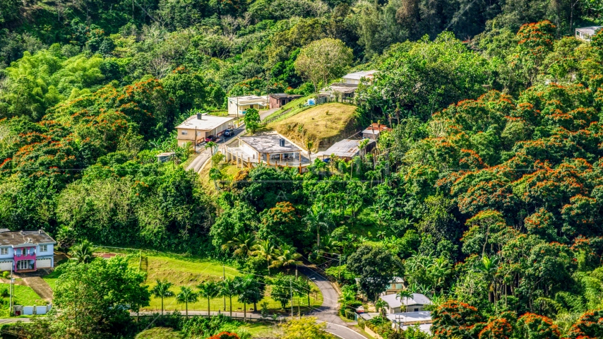 Rural homes by tree-covered hills in Vega Baja, Puerto Rico  Aerial Stock Photo AX101_042.0000199F | Axiom Images