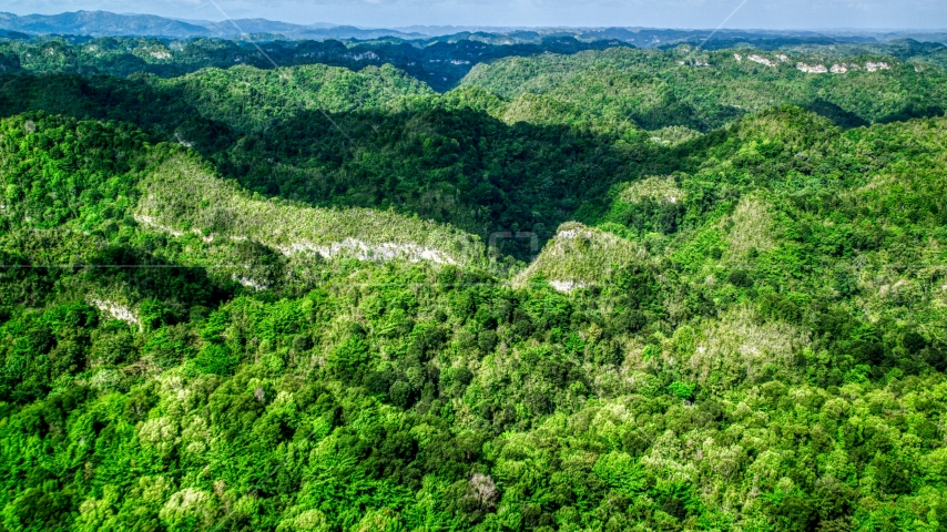 Tree covered mountains and jungle, Karst Forest, Puerto Rico Aerial Stock Photo AX101_050.0000204F | Axiom Images