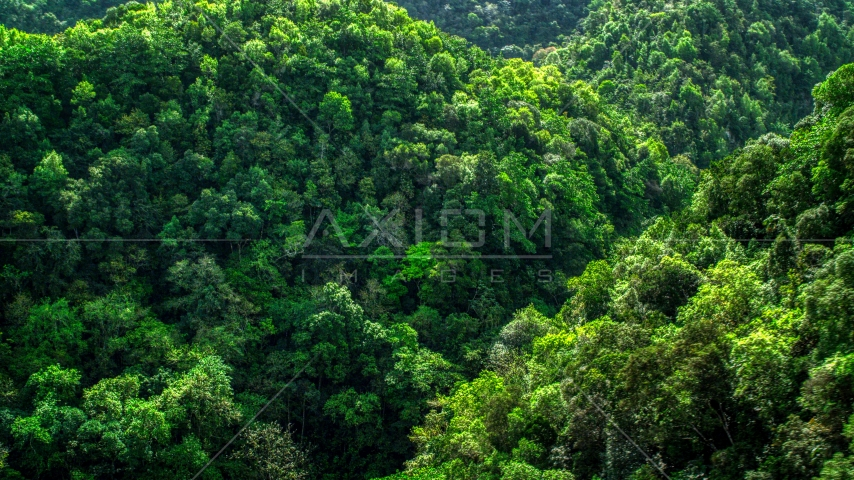 A view of the lush jungle and mountains in the Karst Forest, Puerto Rico  Aerial Stock Photos | AX101_055.0000000F