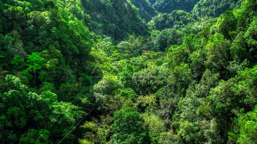 Dense jungle covering karst mountains in the Karst Forest, Puerto Rico  Aerial Stock Photos | AX101_055.0000215F