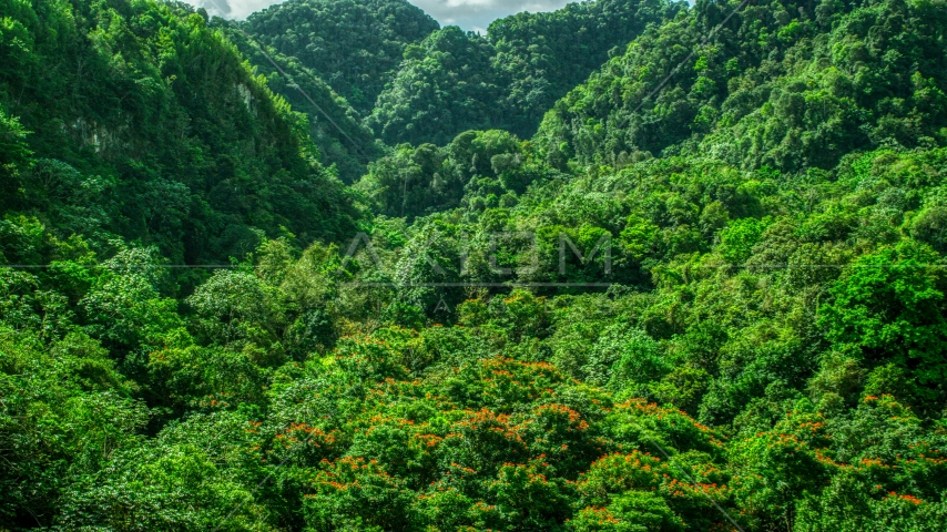 Dense jungle, Karst Forest, Puerto Rico  Aerial Stock Photo AX101_056.0000223F | Axiom Images