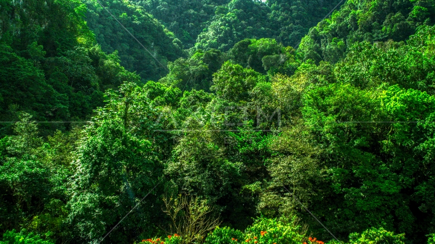 Dense jungle in the Karst Forest, Puerto Rico  Aerial Stock Photo AX101_057.0000247F   Axiom Images