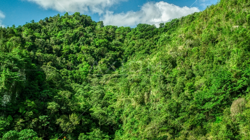 Mountain covered in jungle in the Karst Forest, Puerto Rico  Aerial Stock Photos | AX101_058.0000069F