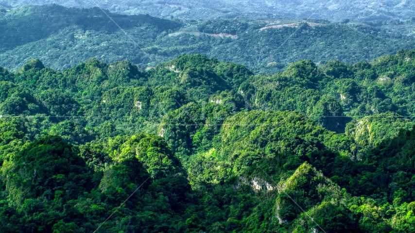 Lush green jungle in the Karst Forest, Puerto Rico Aerial Stock Photo AX101_064.0000132F | Axiom Images