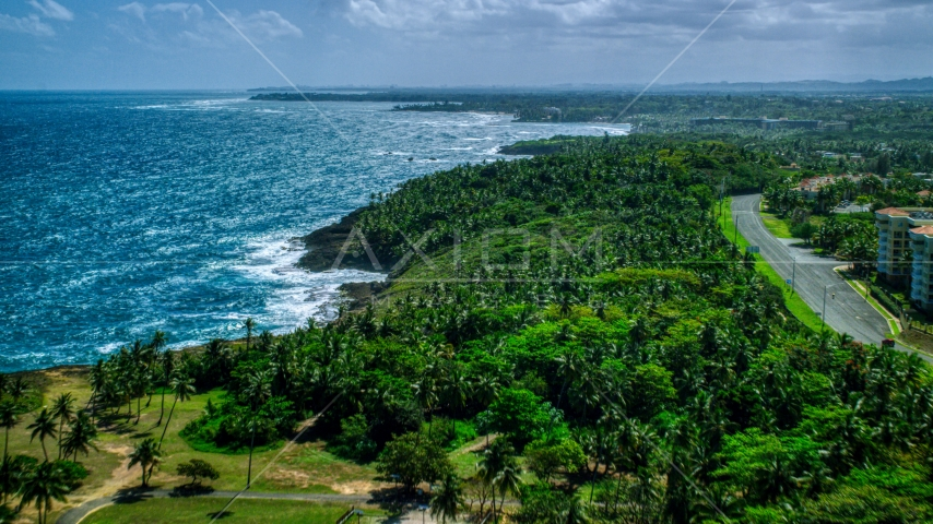 Palm trees and a road along the Caribbean island coast in Vega Alta, Puerto Rico  Aerial Stock Photos | AX101_210.0000258F
