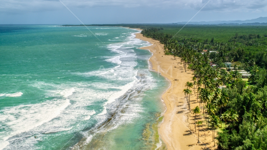 Waves rolling in toward a tree-lined beach in Loiza, Puerto Rico  Aerial Stock Photos | AX102_019.0000224F