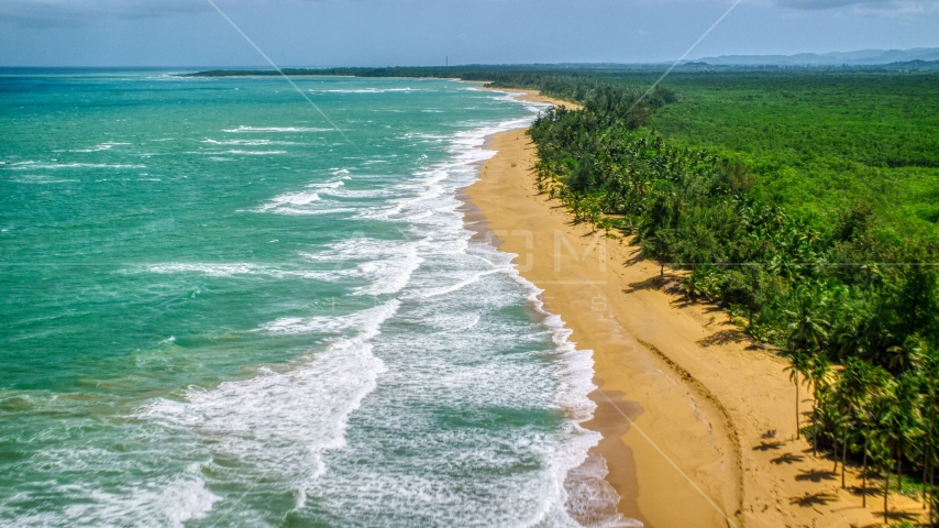 Tree lined Caribbean beach and turquoise water, Loiza, Puerto Rico  Aerial Stock Photos | AX102_020.0000221F