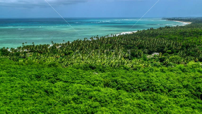 Palm trees on the coast by beautiful turquoise ocean, Loiza, Puerto Rico  Aerial Stock Photo AX102_027.0000050F | Axiom Images