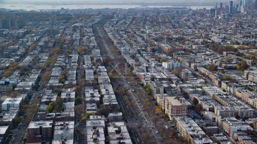 Tree-lined street through Brooklyn in Autumn, New York City Aerial Stock Photos | AX120_081.0000093F