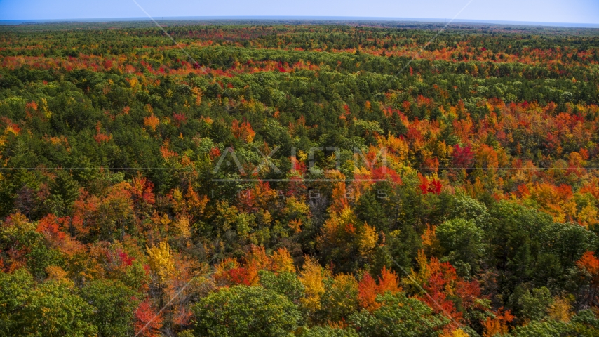 A colorful autumn forest in Biddeford, Maine Aerial Stock Photos | AX147_283.0000075