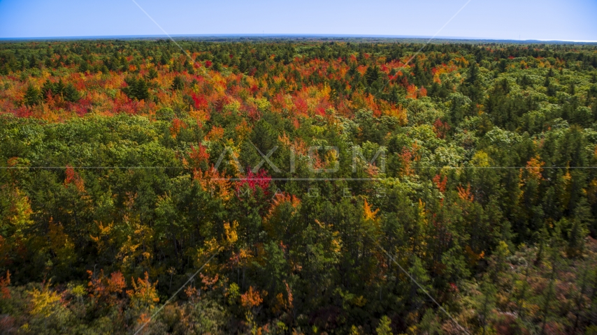 Colorful autumn trees in a forest, Biddeford, Maine Aerial Stock Photos | AX147_285.0000017