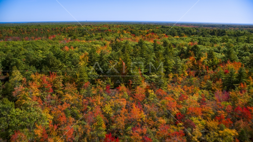 A forest with colorful fall leaves on the trees in autumn, Biddeford, Maine Aerial Stock Photo AX147_287.0000088 | Axiom Images