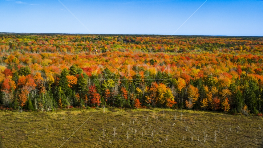 A colorful forest landscape in autumn, Cushing, Maine Aerial Stock Photos | AX148_041.0000034