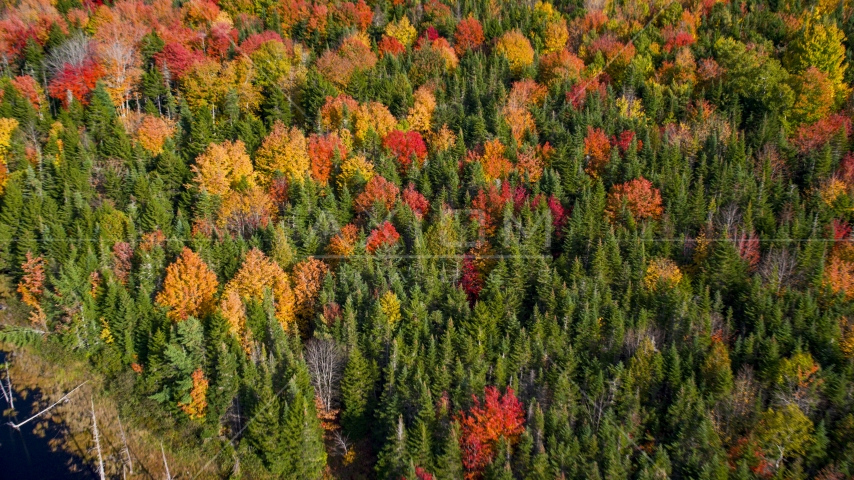 Colorful autumn forest in Cushing, Maine Aerial Stock Photos | AX148_048.0000042