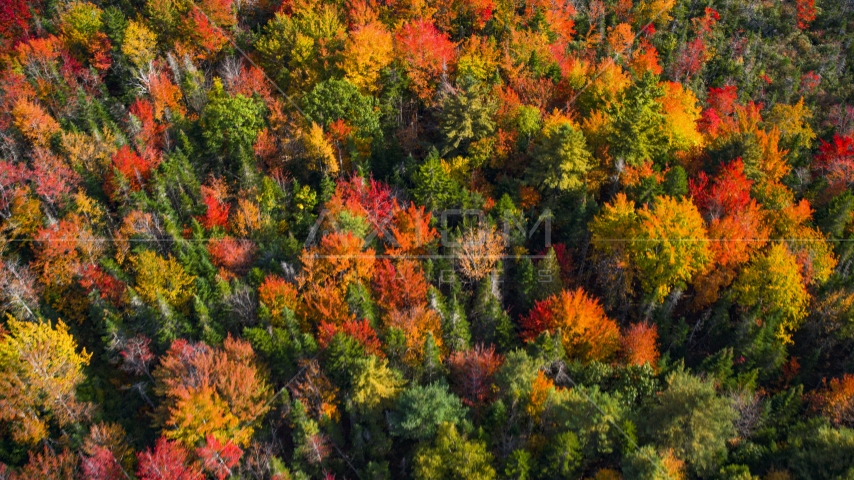 A colorful forest in autumn, Cushing, Maine Aerial Stock Photo AX148_051.0000000 | Axiom Images