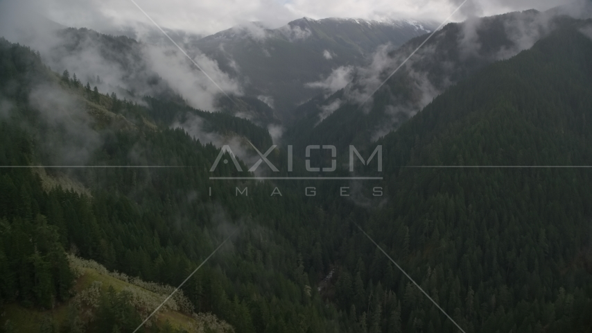 A canyon with Eagle Creek Trail and misty forest in Cascade Range, Hood River County, Oregon Aerial Stock Photos | AX154_050.0000000F